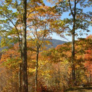 Jesień W USA
