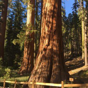 Wycieczka Do Yosemite National Park